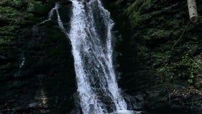瀑布在喀尔巴阡山脉的森林里 股票录像