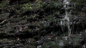 瀑布在喀尔巴阡山脉的森林里 影视素材