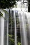瀑布在塔斯马尼亚岛森林里 库存照片