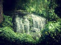 瀑布在塞舌尔群岛的密林 免版税图库摄影