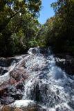 瀑布在密林 Sinharaja雨林,斯里兰卡 免版税库存图片