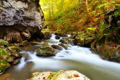 瀑布在山毛榉森林里 图库摄影