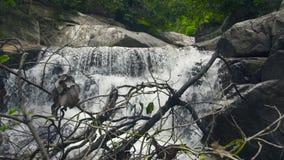 瀑布在山的小瀑布流程 放出从流动在大石头的瀑布的水在山河 影视素材