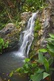 瀑布在庭院里 免版税库存图片