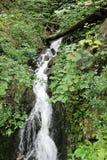 瀑布在新英格兰 库存照片