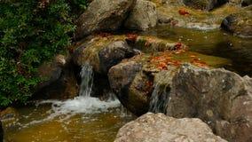 瀑布在日本庭院,放大 股票录像
