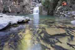 瀑布在有低谷和许多鱼的森林里 免版税图库摄影