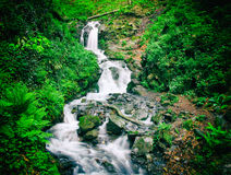瀑布在有行动迷离作用的绿色森林里,减速火箭的照相机的作用 免版税库存图片