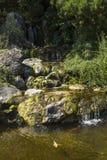 瀑布在有鱼的日本庭院里 免版税库存图片