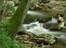 瀑布在森林里- 2 免版税库存图片
