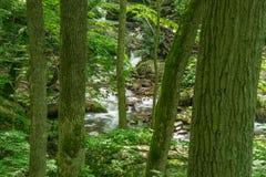 瀑布在森林里- 5 图库摄影