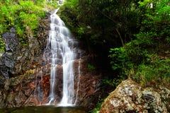 瀑布在森林里 库存照片