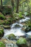 瀑布在森林里 免版税库存图片