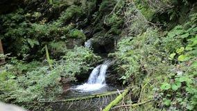 瀑布在森林里 股票视频
