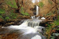瀑布在森林里 库存图片