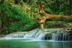 瀑布在深森林里 库存图片