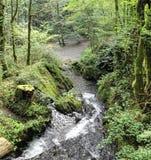 瀑布在狂放的Endertal谷的狂放的swoosh在eifel雷希奥 免版税图库摄影