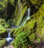 瀑布在用绿色青苔盖的石头密林  库存图片