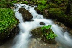 瀑布在罗马尼亚 免版税图库摄影