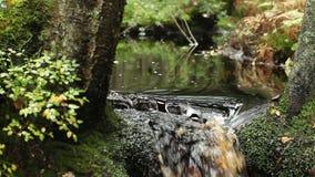 瀑布在雨林里 股票录像