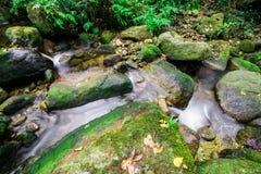 瀑布在雨林里 图库摄影
