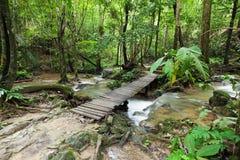 瀑布在雨林里 库存照片