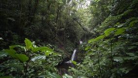 瀑布在雨林里