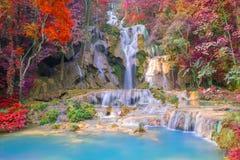 瀑布在雨林(在Luang praba的Tat匡Si瀑布里 免版税库存照片