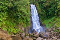 瀑布在马提尼克岛,加勒比 免版税图库摄影