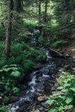 瀑布在绿色森林里,喀尔巴阡山脉 库存图片