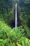 瀑布在Akaka落国家公园,夏威夷 免版税库存照片