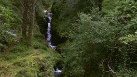 瀑布在Glendalough 股票录像