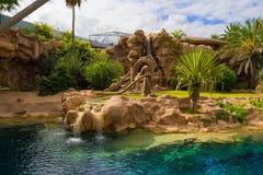 瀑布在Loro Parque 免版税图库摄影