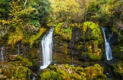 瀑布接近在森林里 免版税库存照片