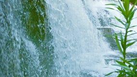 瀑布特写镜头 纯净的水和植物浪花  免版税图库摄影