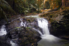 瀑布的槐。在秋天颜色的剪影。 库存照片