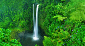 瀑布自然新绿色湿气概念 图库摄影