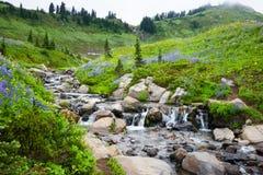 瀑布野花瑞尼尔山 库存图片