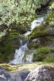 瀑布青苔北部自然 免版税库存照片