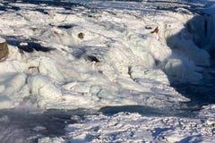 冻结瀑布 免版税图库摄影