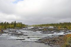 瀑布Trappstegsforsen在Vilhelmina附近的北部瑞典 免版税库存图片