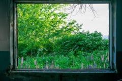 灌木、树、花和天空看法从被毁坏的大厦的窗口 图库摄影