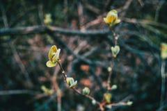 灌木两个分支特写镜头与叶子生长的 库存图片