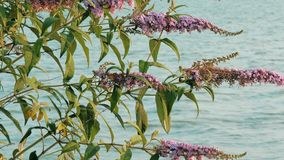 灌木分支特写镜头轻轻地摇摆在风的由湖岸在日落 湖的看法在之间的 影视素材