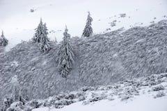 灌木包括冷杉雪结构树 免版税图库摄影