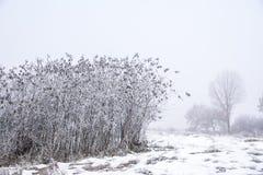灌木和一些棵树在一个多雪的草甸在一个有雾的冬日 免版税库存图片