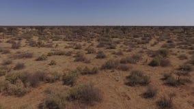 灌木和树看法在大草原 影视素材