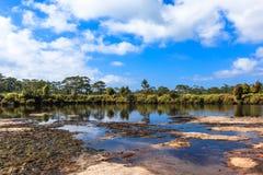 灌木和树风景在一个干盐湖附近有一点的水在前景 免版税图库摄影