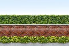 灌木和砖范围 库存图片