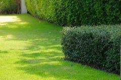 灌木和绿色草坪,前院风景 库存照片